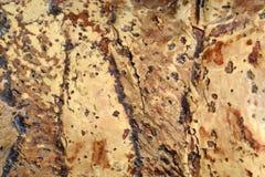 Geweven oppervlakte van cork stukken in bruine tonen royalty-vrije stock foto's