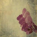 Geweven oude document achtergrond met magenta orchidee Royalty-vrije Stock Afbeelding