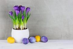 Geweven Pasen-achtergrond met het bloeien purper col. van het krokusseneind Royalty-vrije Stock Fotografie