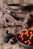 Gewichten en viburnum bij het ontslaan Royalty-vrije Stock Afbeeldingen