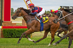 Gewinnendes Rennpferd und weiblicher Jockey bei Dubbo NSW Australien Lizenzfreie Stockfotografie