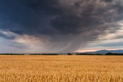 Gewitter über einem Weizenfeld Stockfotografie