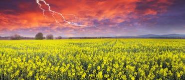 Gewitter auf Rapssamenfeld Stockfoto