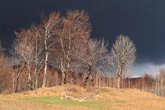 Gewitter im Wald Stockfotos