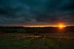 Gewitter mit Sonnenuntergang auf dem Traubengebiet Lizenzfreie Stockbilder