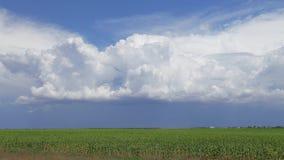 Gewitterwolken über Sonnenblumenplantage, Zeitspanne stock video