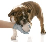 Gewond dier Stock Foto's