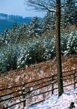 Gewone de winterdag in het hout royalty-vrije stock fotografie