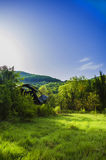Geworfen in die grüne Wildnis Lizenzfreie Stockfotos