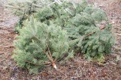 Geworfene heraus Weihnachtsbäume Lizenzfreie Stockfotos