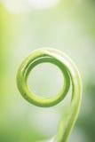 Gewundene grüne lef gerade Geburt Lizenzfreies Stockfoto