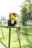 Gewundener Hornbill stockfotos