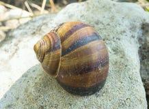 Gewundenes Shell Stockbild