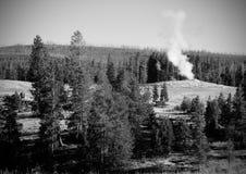 Geyser μέσα στα δέντρα Στοκ εικόνες με δικαίωμα ελεύθερης χρήσης