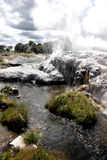 Geyser. New zealand geysers Royalty Free Stock Photos