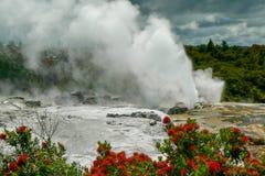 Geyser al parco geotermico del paese delle meraviglie termico di Wai-O-Tapu, Nuova Zelanda immagini stock
