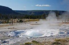 Parco nazionale di Yellowstone, U.S.A. immagine stock libera da diritti