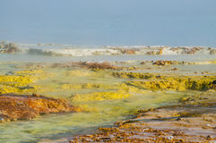 Geyser Bacteria Close-up. Colorful Layers of microorganisms in the yellowstone geyser Stock Photo