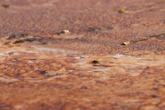 Geyser Bacteria Close-up. Colorful Layers of microorganisms in the yellowstone geyser Royalty Free Stock Photo