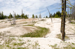 Geyser Basin in Yellowstone Stock Image