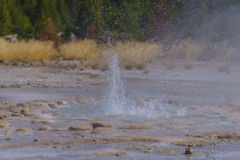 Geyser Close-Up. A geyser close up using a high speed shutter to freeze the action. Located in Yellowstone National Park Stock Photo