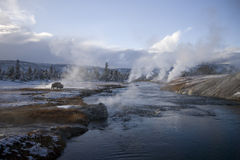 Geyser de 16 Yellowstone et Buffalo Photo stock
