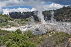 Geyser de Whakarewarewa no parque térmico de Te Puia, Nova Zelândia Fotografia de Stock Royalty Free