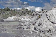 Geyser de Whakarewarewa no parque térmico de Te Puia, Nova Zelândia Foto de Stock Royalty Free