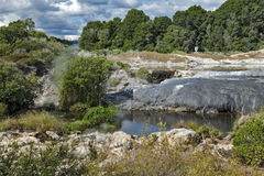 Geyser de Whakarewarewa no parque térmico de Te Puia, Nova Zelândia Fotos de Stock