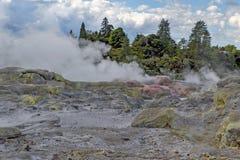 Geyser de Whakarewarewa no parque térmico de Te Puia, Nova Zelândia Imagem de Stock