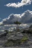 Geyser de Whakarewarewa no parque térmico de Te Puia, Nova Zelândia Imagem de Stock Royalty Free