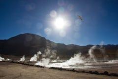 Geyser Del Tatio in Chile morgens stockfoto