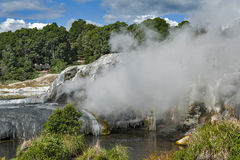Geyser di Whakarewarewa al parco termico di Te Puia, Nuova Zelanda Immagine Stock Libera da Diritti