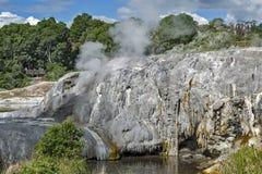 Geyser di Whakarewarewa al parco termico di Te Puia, Nuova Zelanda Immagine Stock