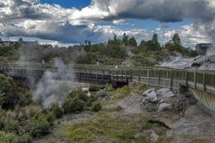 Geyser di Whakarewarewa al parco termico di Te Puia, Nuova Zelanda Fotografie Stock Libere da Diritti