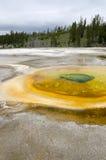 Geyser em Yellowstone Imagem de Stock Royalty Free