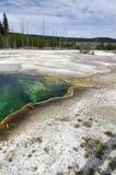 Geyser em Yellowstone Foto de Stock