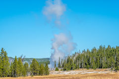 Geyser erupting with large cloud of steam from towards the sky. Geyser in Old Faithful area erupting in Yellowstone National Park Royalty Free Stock Photos