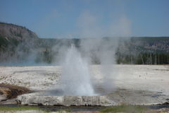 A geyser erupting at yellowstone park Royalty Free Stock Photo