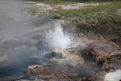A geyser erupting at yellowstone park Royalty Free Stock Images