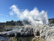 Geyser erupts with white smoke, Te Puia Stock Photos