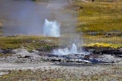 Geyser esperançoso no parque nacional de Yellowstone fotografia de stock royalty free