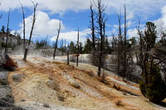 Geyser marks. Wither woods surrounding geyser in national park, 200605 Stock Images