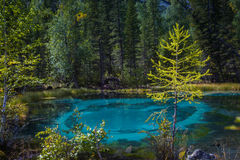 Geyser mountain lake with blue clay. Attraction in Altai, Russia Royalty Free Stock Images