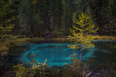 Geyser mountain lake with blue clay. Attraction in Altai, Russia Royalty Free Stock Photo