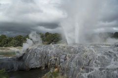 Geyser. New Zealand Royalty Free Stock Images