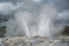 Geyser. New Zealand Stock Photography