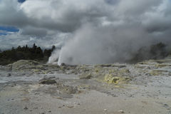 Geyser. New Zealand Royalty Free Stock Photography