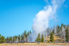 Geyser som får utbrott i den Yellowstone nationalparken royaltyfri foto