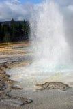 geyser yellowstone Arkivbilder